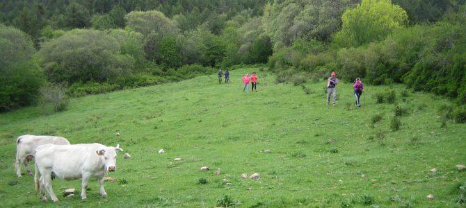Fotos excursió Nogueruelas